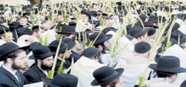 Jewish settlers launch arson attack on Palestinian cultivated lands